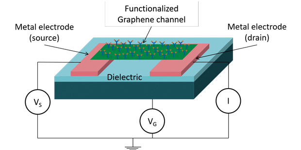 Graphene-based chemical and biological sensors incorporate field effect transistors to enable the sensor to identify specific species and quantify the concentration in the sample. Image courtesy of Graphene Frontiers.