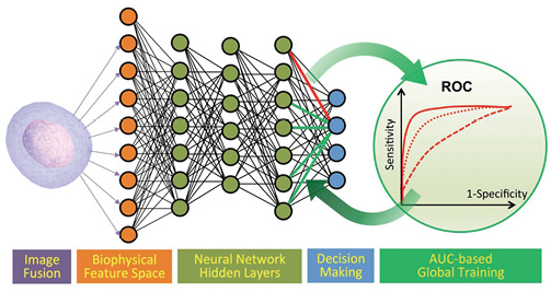 UCLA researchers used MathWorks Deep Learning tools to create a new diagnostic product for examining cancer cells that gives superior results over existing methods. The researchers say modeling the system with DL saved months of experimental time. The cancer cell neural net model was then repurposed for algal cell classification, by providing new data to the algorithm. Image courtesy of MathWorks.